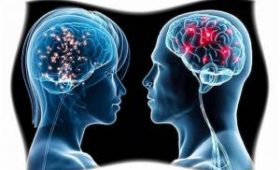 Эксперты назвали разницу в старении мозга мужчин и женщин