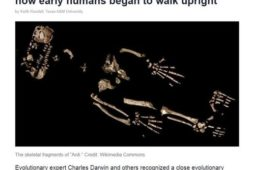 Скелет древнего человека возрастом 4,4 млн лет оказался максимально близок к обезьяньему