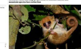Названы животные, которые исчезнут первыми при глобальном потеплении в 3°C